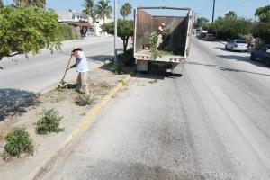 03 Constante el mantenimiento de camellones en Los Cabos_ se han rehabilitado más de 36 km 4